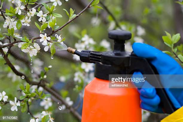 fertilizer trees
