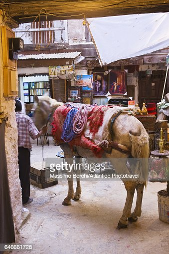 Fes el Bali (Old Fes), Medina, a mule in a courtyard : Stock Photo