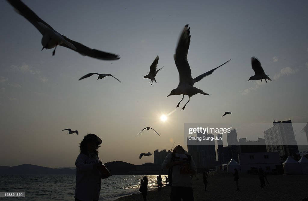 Festival-goers feed gulls at the BIFF Plaza during the 17th Busan International Film Festival (BIFF) at Busan Cinema Center on October 10, 2012 in Busan, South Korea. The biggest film festival in Asia showcases 304 films from 75 countries and runs from October 4-13.