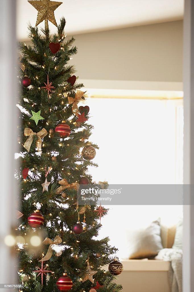 Festive Christmas Tree : Stock Photo