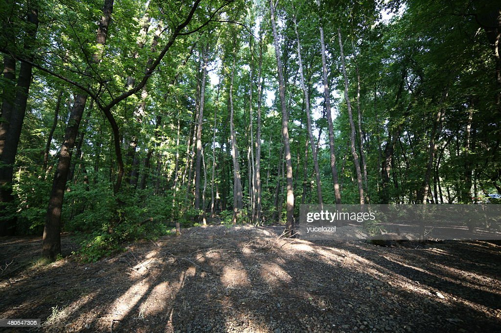 Fethiye Gunluklu bosque : Foto de stock