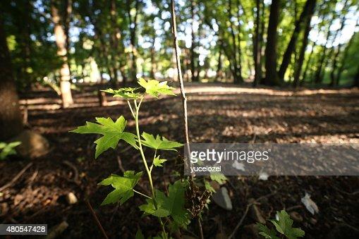 Fethiye Gunluklu floresta : Foto de stock