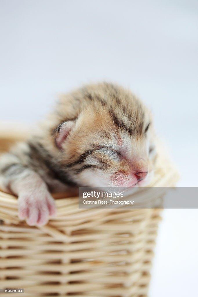 Few days old kitten in basket : Stock Photo