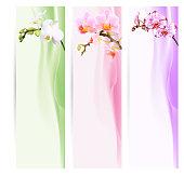 Lesezeichen, Banner oder Etiketten mit Orchideen und farbigem Hintergrund.