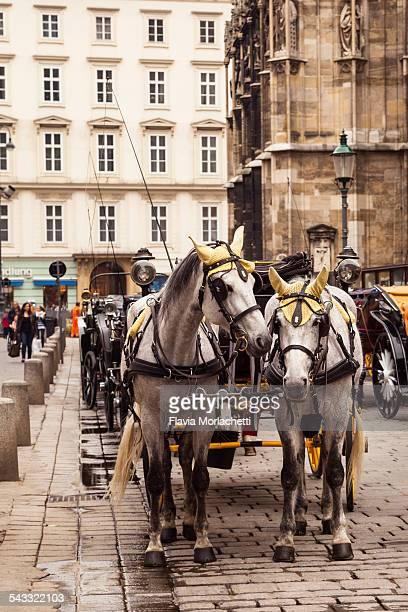 Fiaker horses in Vienna, Austria