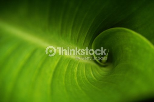 Fibonacci Green : Stock Photo
