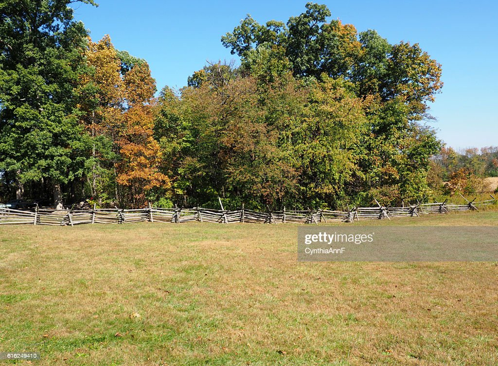 field and fence by trees : Foto de stock