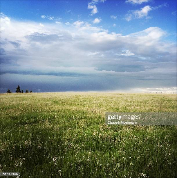 Field and sky in Montana
