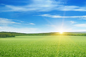 green field and sun rise