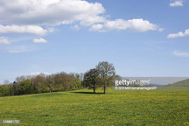 Field and trees in France