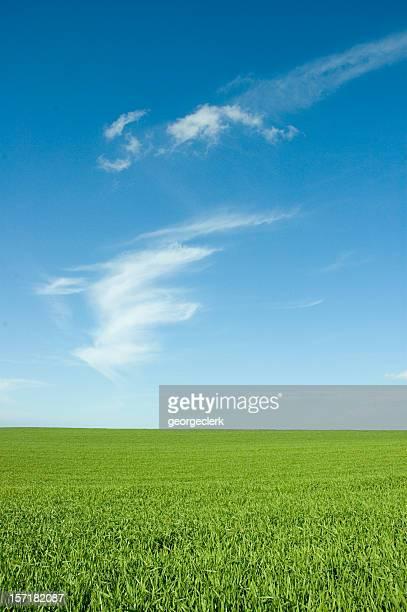 Field and Wispy Cloud
