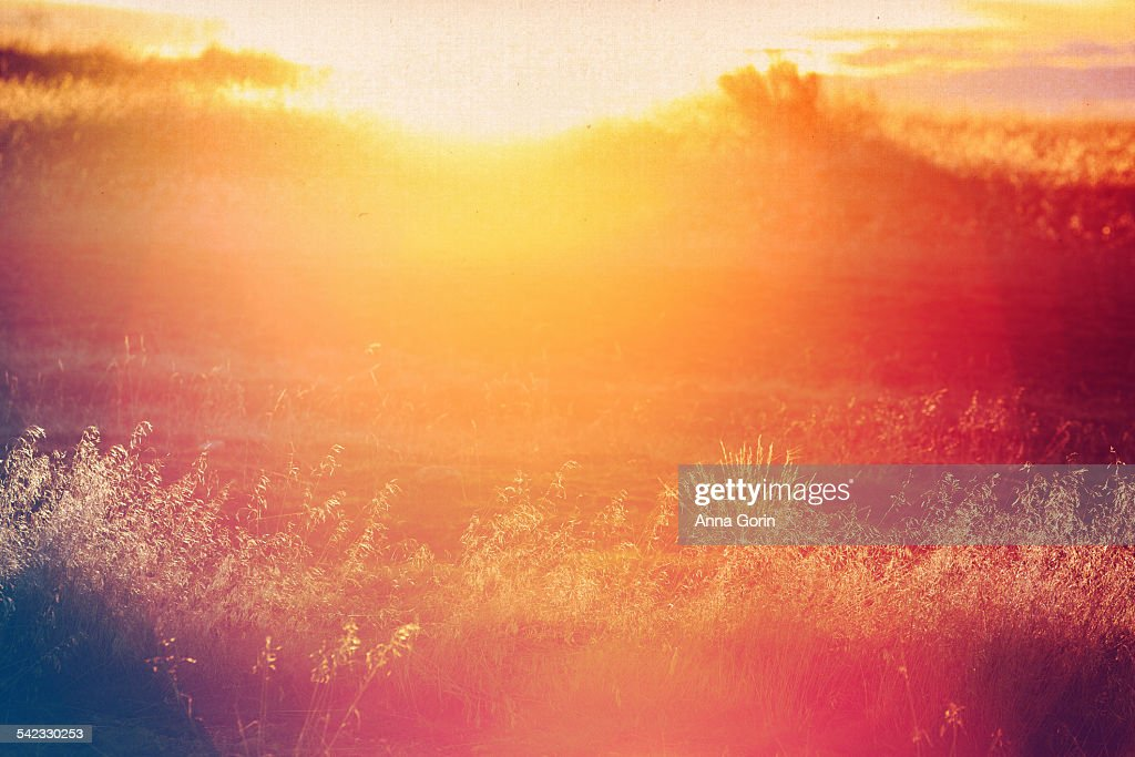 Field at sunset, lens flare and vintage tint : Stock Photo