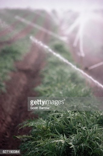 Field being irrigated : Stockfoto