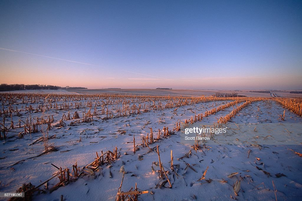 Field covered with snow : Stock Photo