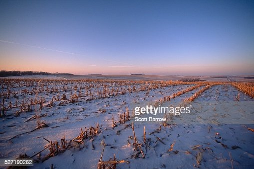 Field covered with snow : Stock-Foto