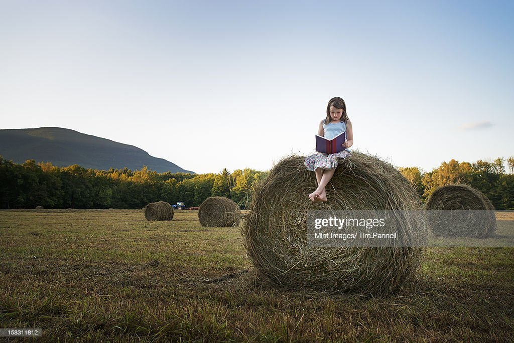 A field full of tall rounded hay bales, and a young girl sitting on the top of one large bale. : Stock Photo