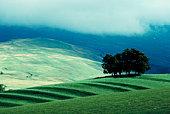 Field in Cumbria , England