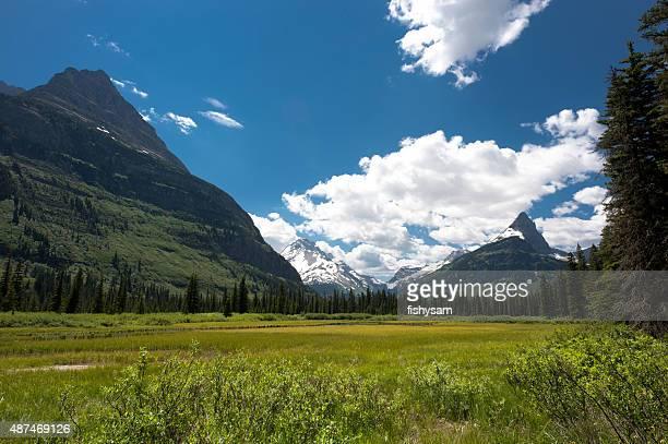 Field in Glacier National Park Montana