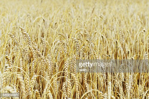 field in summer day : Stock Photo