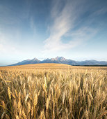 Field in the mountain valley. Agricultural landscape in the Tatry mountain, Slovakia