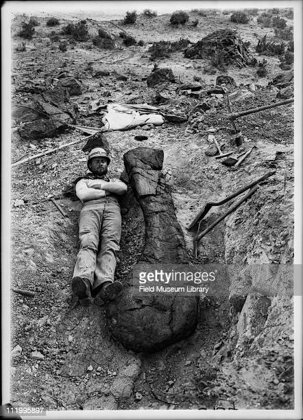 Field Museum expedition member lying down next to the humerus of Brachiosaurus altithorax late 1890s or early 1900s