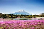 Fuji mountain and pink moss phlox