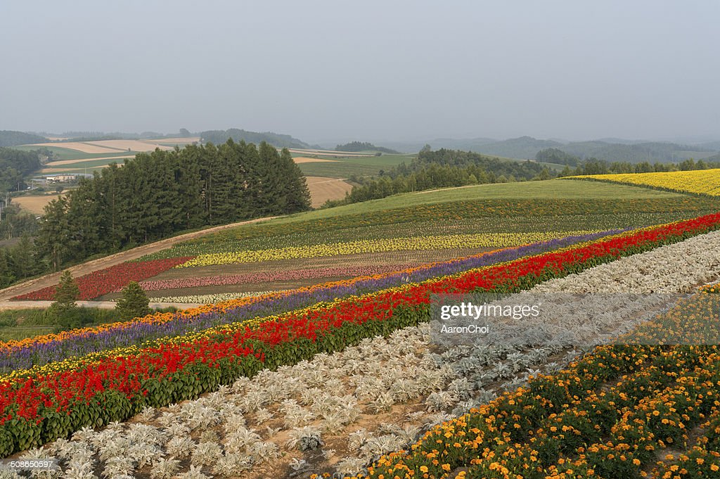 Field of flowers : Stock Photo