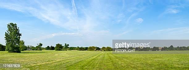 Feld mit Bäumen