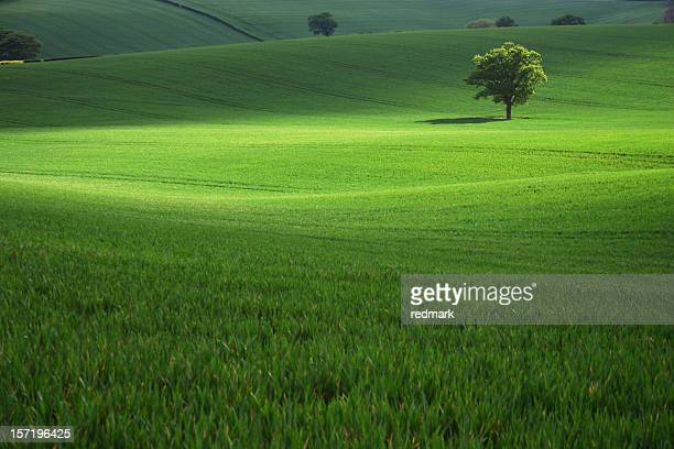 Field of green grass with a single tree