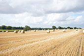 A field of hay bails in the countryside