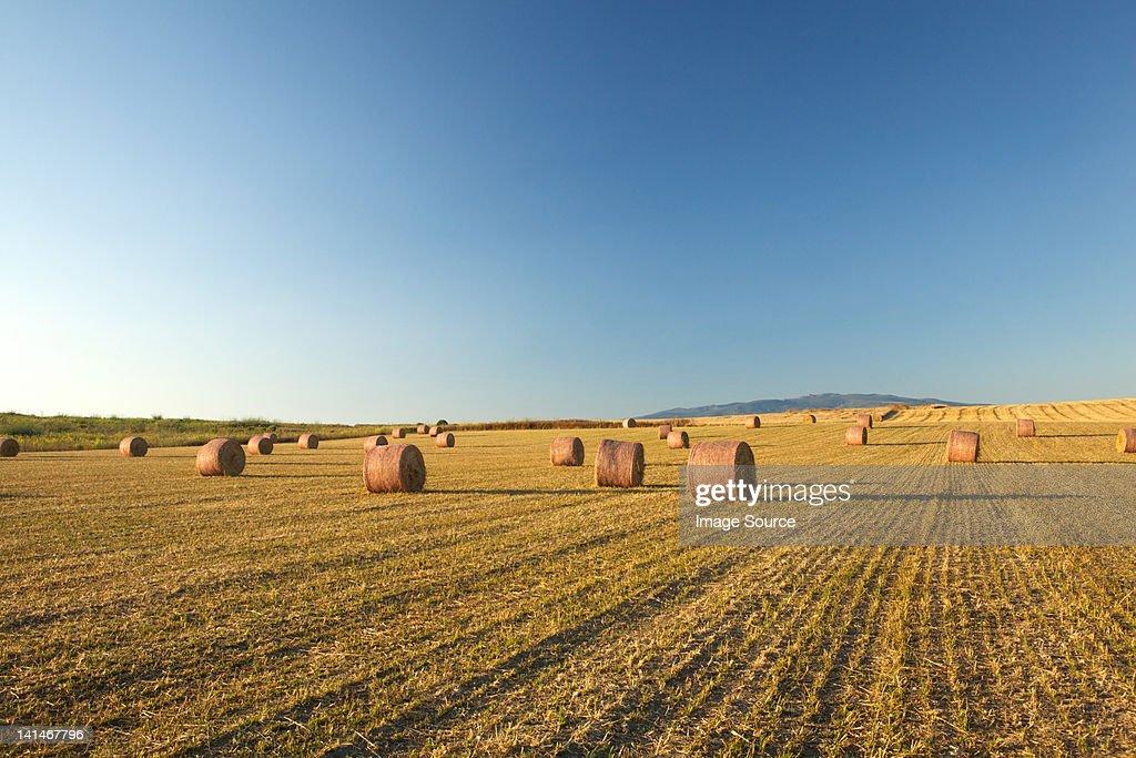 Field of hay bales, Sardinia