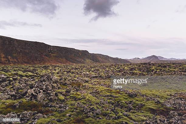 Field of lava covered with green moss