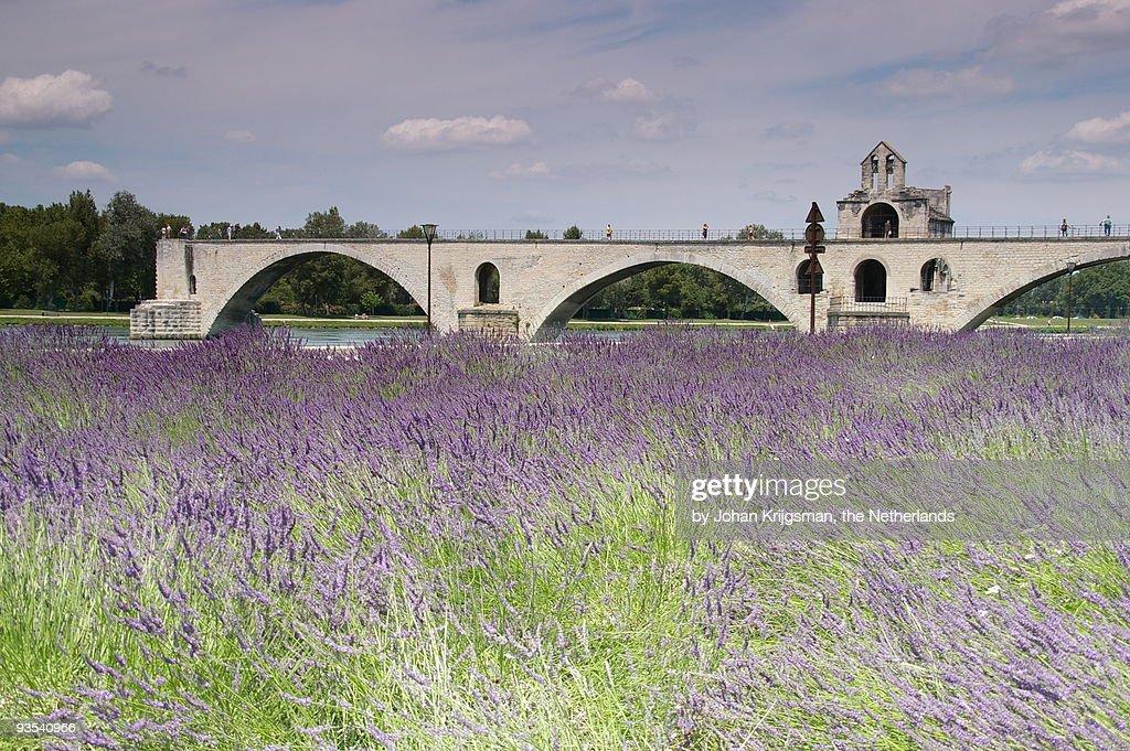 Field of lavenders and St. Benezet's Bridge