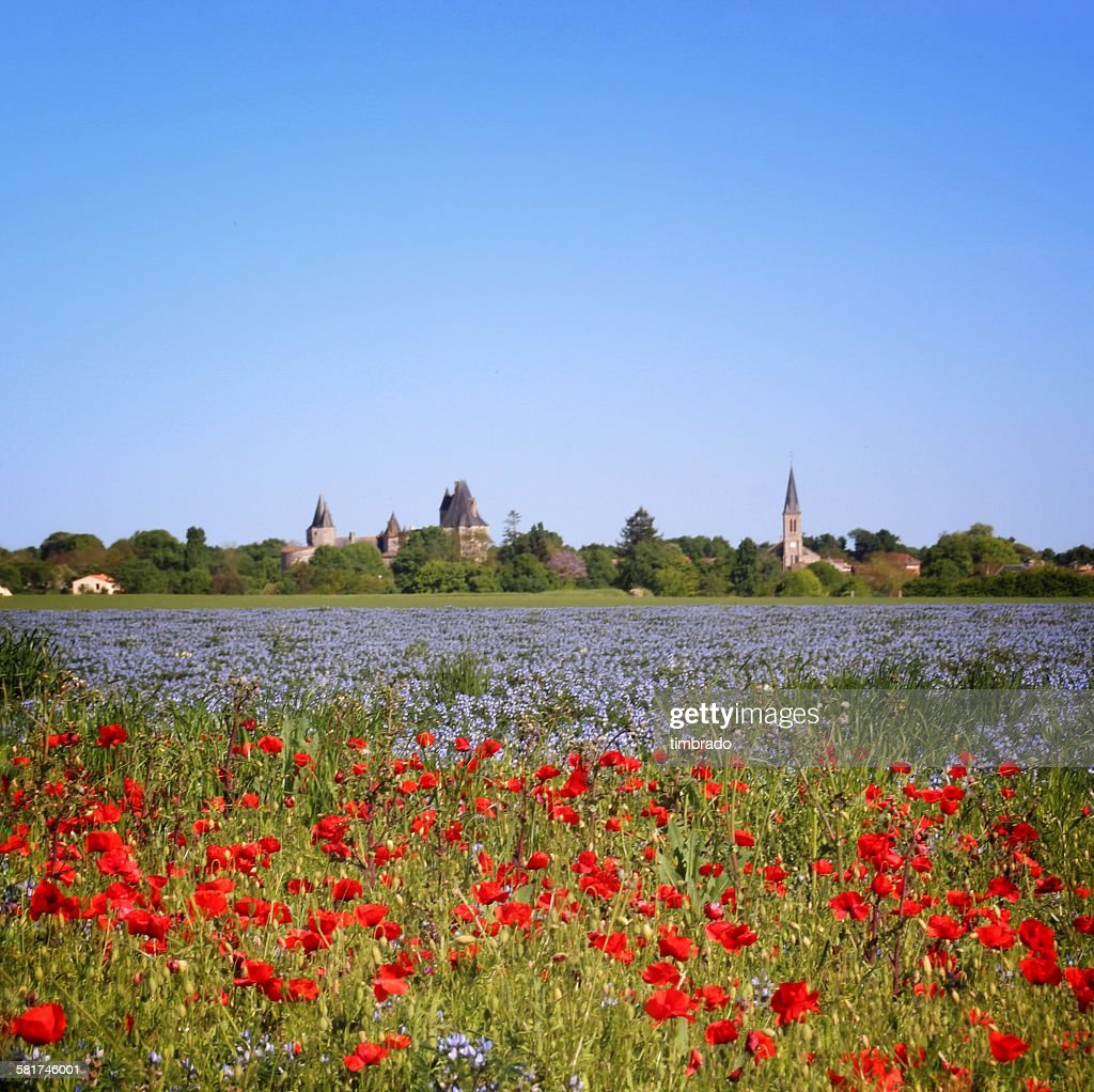 Field of poppies and blue wildflowers, Niort, Poitou-Charentes, France