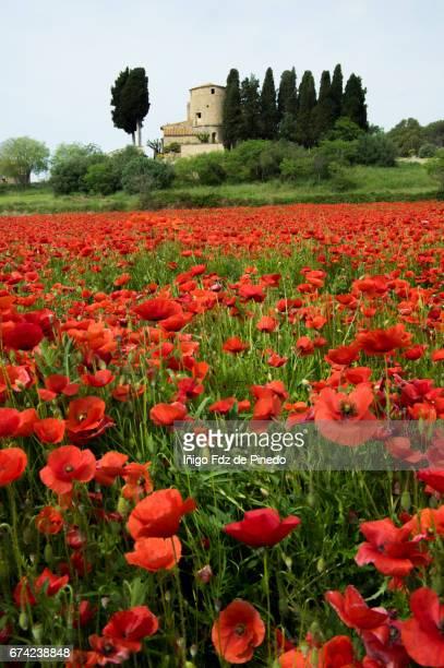 Field of poppies in Peratallada- Bajo Ampurdán- Catalonia- Spain