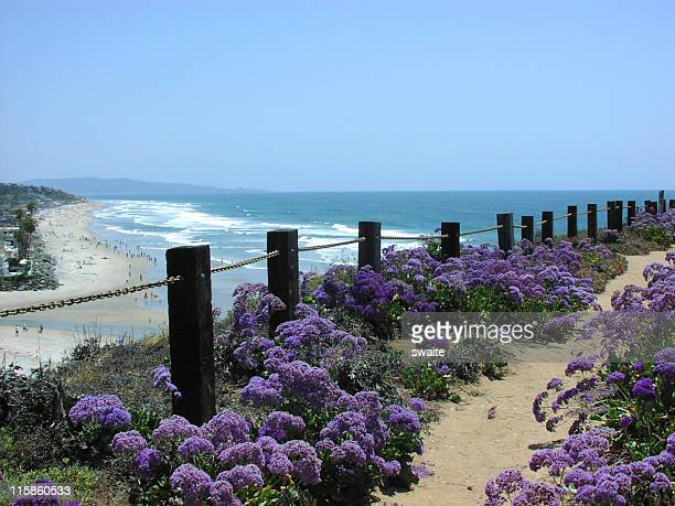 A field of purple flowers by a fence with an ocean view