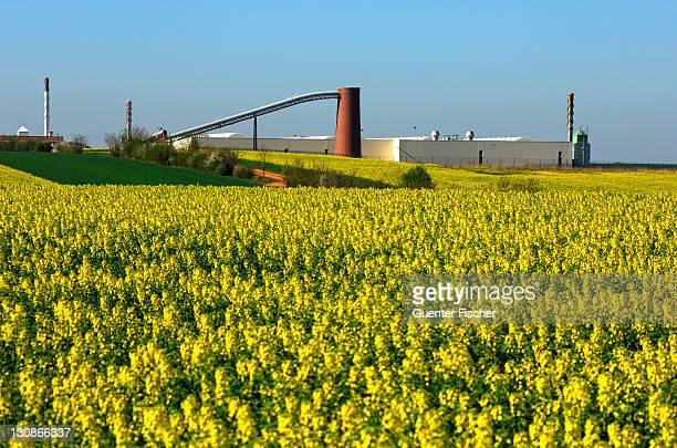 Field of rapeseed in front of an industrial facility, Germany