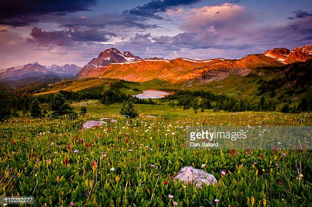Field of wild flowers and mountain valley.  Banff National Park, Canada.