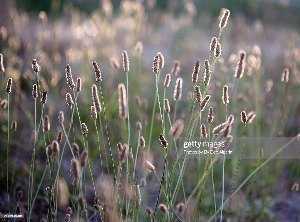 Field of Wild Grass : Stock Photo