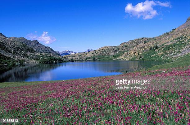 Field of wildflowers by lake in Mercantour National Park, France
