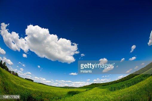 Field on Sunny Day, Fisheye