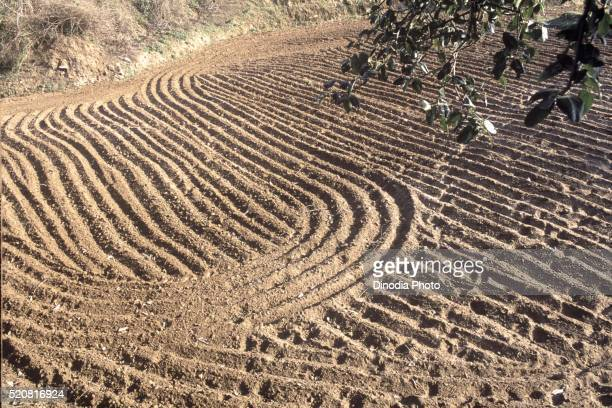 Field ploughed by tractor, Anaikatty, Tamil Nadu, India