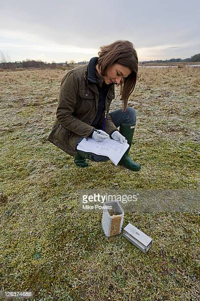 Field scientist logging details of Harvest mouse (Micromys minutus) in trap, Norfolk, UK