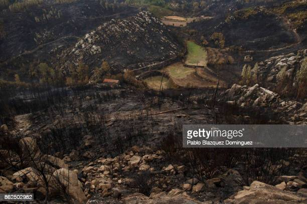 A field stands green surrounded by ash near Vouzela on October 17 2017 in Viseu region Portugal At least 41 people have died in fires in Portugal and...