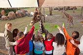 Teachers with group of elementary school children at zoo feeding giraffes.