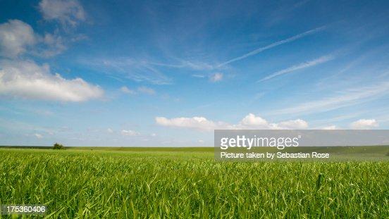 Field under blue sky.