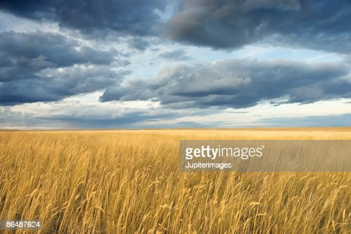 Field with storm clouds : Stock Photo