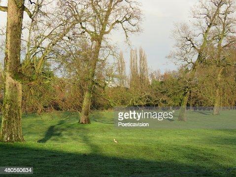 Campo con árboles : Stock Photo