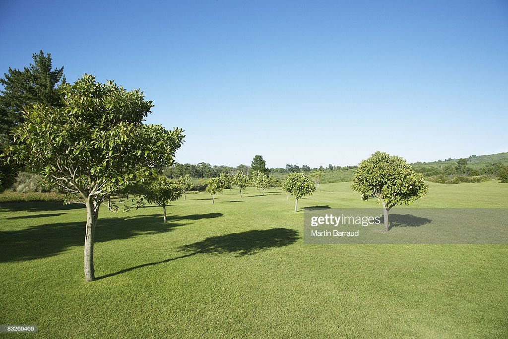 field with trees : Stockfoto
