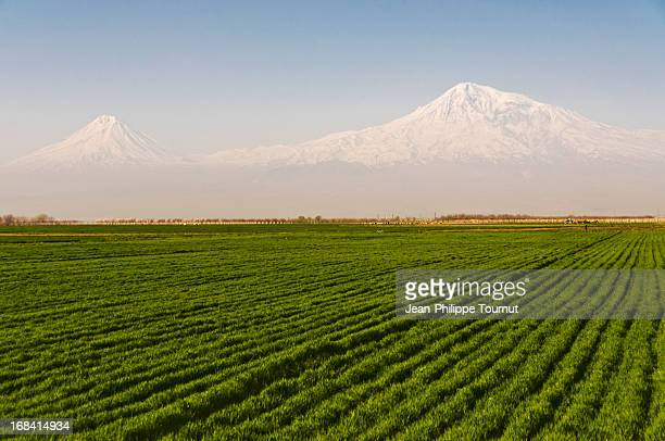 Fields and Mount Ararat